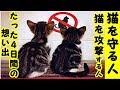 【猫の保護 虐待】たった4日間の切ない想い出、野良猫との人間の共存について猫を助け保護する人もいれば、猫を傷つけ攻撃する人もいるお話・招き猫ちゃんねる。