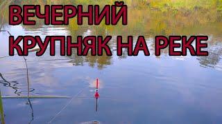 Рыбалка поплавочной удочкой 18 сентября 2021.