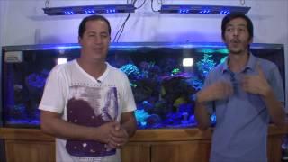 Aquario Marinho Help Reef o inicio