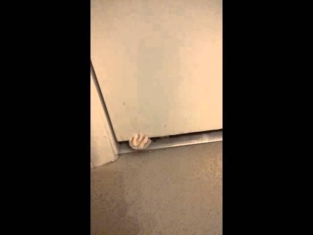 When your cat tries to break in