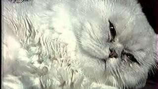 группа   леди  в  черном-сборник  клипов  и  тв-эфиров  -6  видеороликов