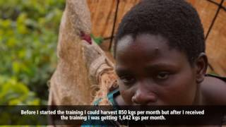 Improving the Livelihoods of Tea Farmers in Malawi
