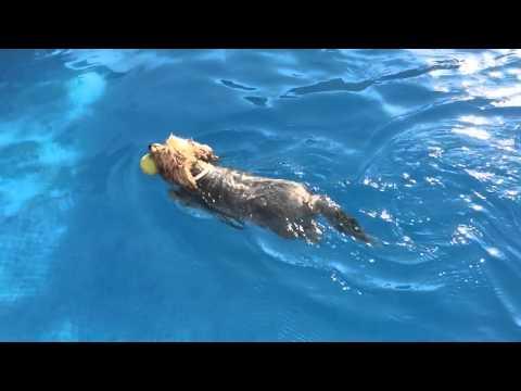 Slow motion Dog swimming