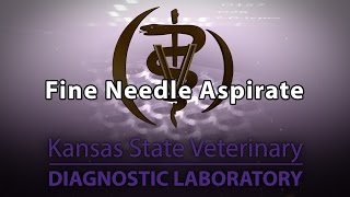 Fine Needle Aspirate