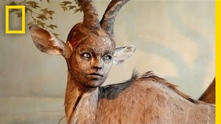 Human-Looking Faces on Animal Bodies: Taxidermy as Art | National Geographic