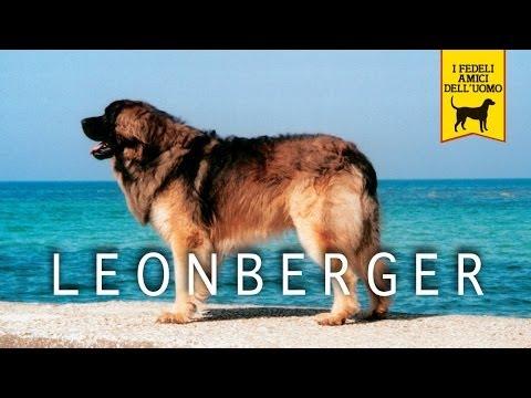 LEONBERGER trailer documentario (razza canina)