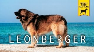 LEONBERGER trailer documentario (razza canina)