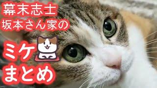 【幕末志士】ミケちゃんまとめ【猫】