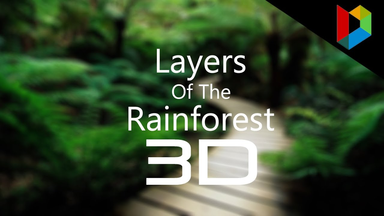 Layers Of The Rainforest 3d Fixed Quiz