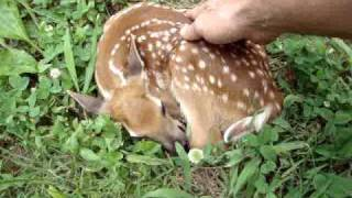 "Baby deer in my yard. ""Are you ok?"