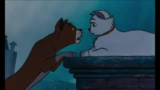 Коты-Аристократы💙 Самый романтичный момент!!!