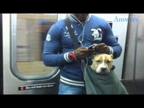 This Subway Banned Dogs That Don't Fit In A Small Bag, So This Man Put His Dog In A Small Bag