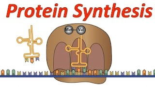 Protein Synthesis! (Mr. W s Rock Music Video)