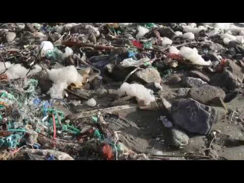 Marine microplastics
