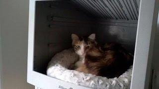 Смешные коты и кошки. Подборка приколов #4