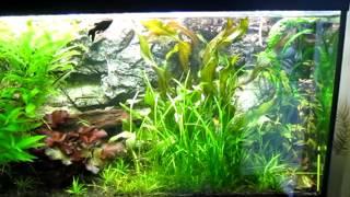 Обслуживание аквариумов(Обслуживание аквариумов., 2012-10-08T09:59:52.000Z)