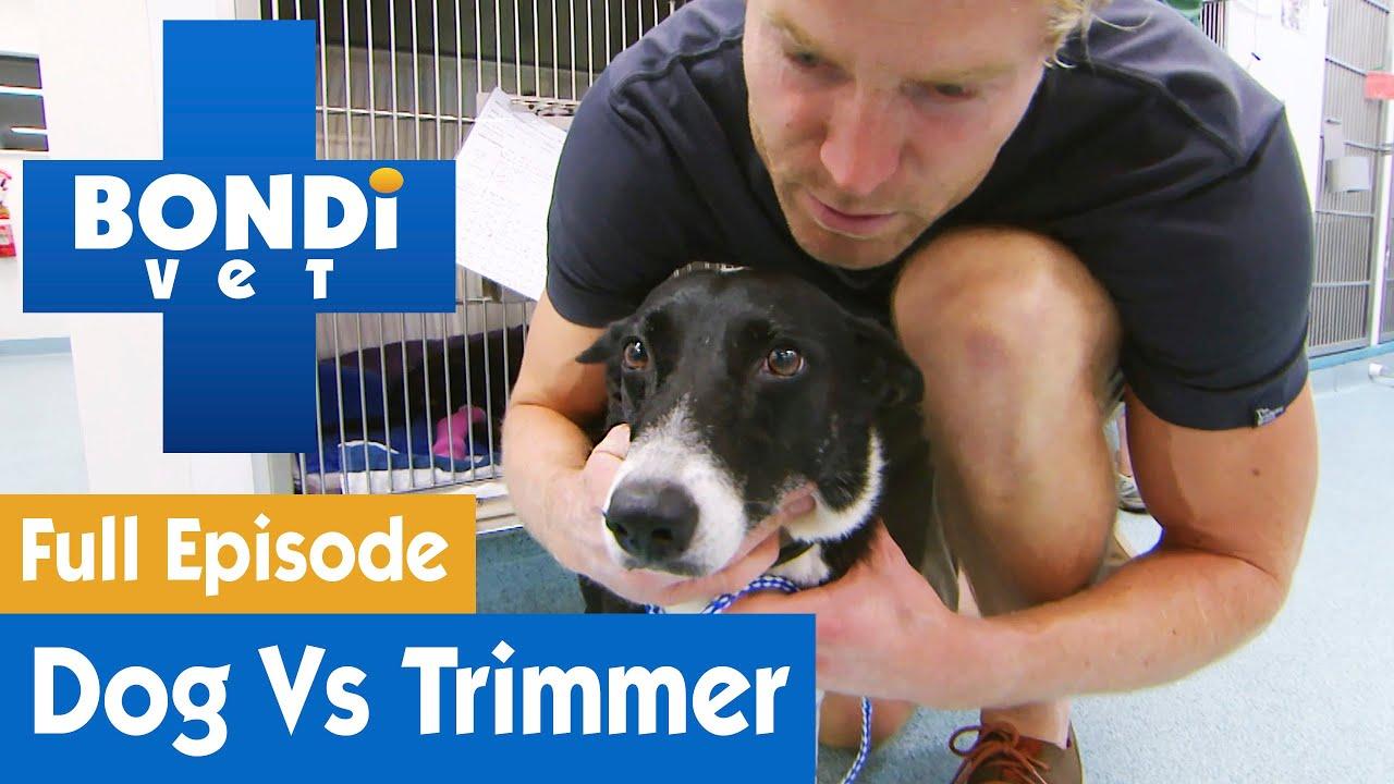 🐶 Dog's Crazy Fight With Hedge Trimmer | FULL EPISODE | S07E16 | Bondi Vet