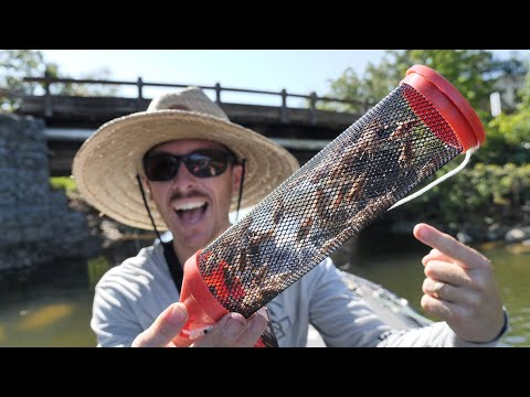 Fishing LIVE Crickets For Spawning Bluegill (Ultra Light Tackle)