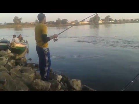 صيد سمك الرعاش في واضح النهار