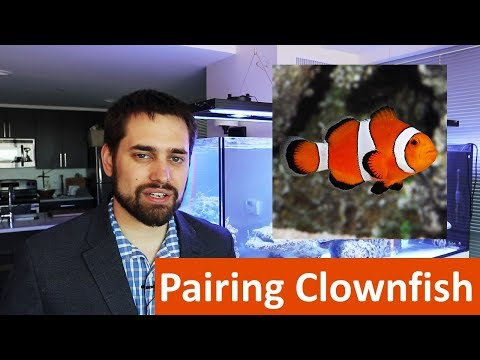 😀 Prize Drawing Details And A Maroon Clownfish Pairing Attempt)