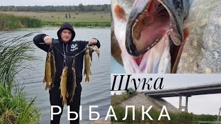 Рыбалка, ловля щуки в Кировоградской области