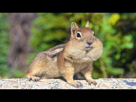 Somewhere in Canada… Chubby Chipmunk Cheeks