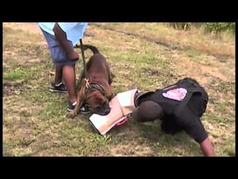 Cane Corso Presa Canario Pitbull Training La Harde Hond