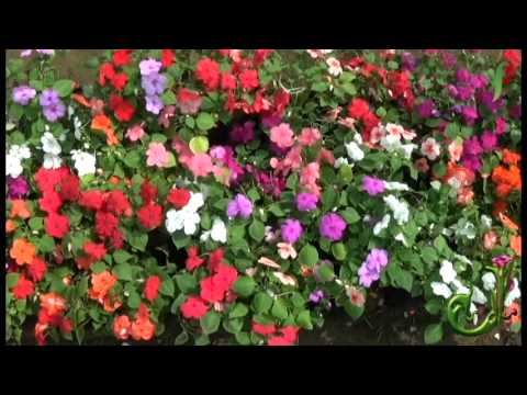 Full of flowers make your mind peaceful watch this video