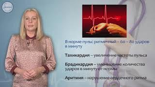 Биология 8 класс. Движение крови по сосудам