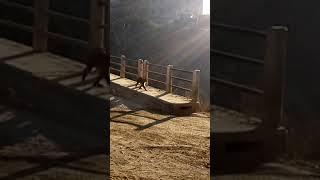 Monkey walking free....