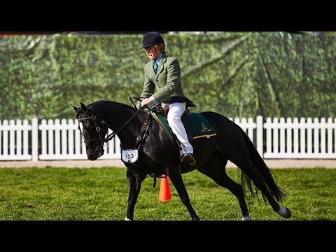 Stock Horse Classes - 2017 Royal Melbourne Show Horses in Action