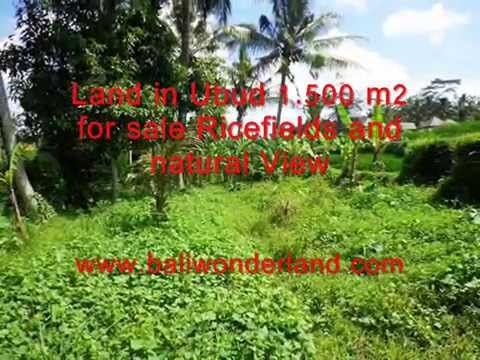 Exotic Property for sale in Bali, land for sale in Ubud Bali -- TJUB383