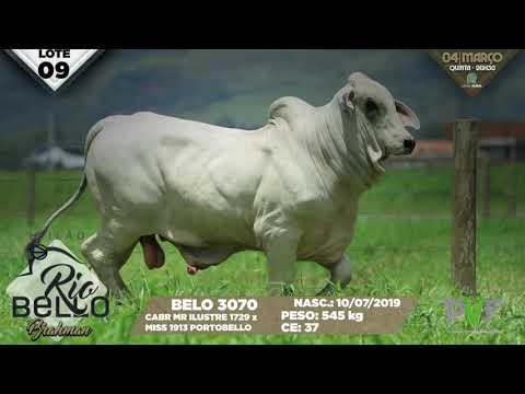 LOTE 09   BELO 3070