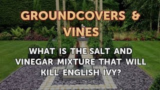 What Is the Salt and Vinegar Mixture That Will Kill English Ivy?
