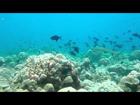 Ocean Predators - Trailer