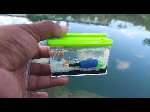 WORLD'S SMALLEST Fish AQUARIUM! (REAL)