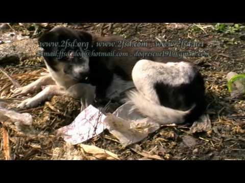 Dog rescue 191 Nasal VG.Tumor หนองแขม