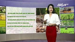 VTC14   Thời tiết nông vụ 12/11/2017   Cảnh giác với ốc sên phá hoại thanh long