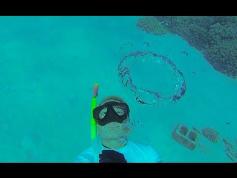 Snorkeling Honaunau Bay and Anaehoomalu Bay on the  Big Island, Hawaii