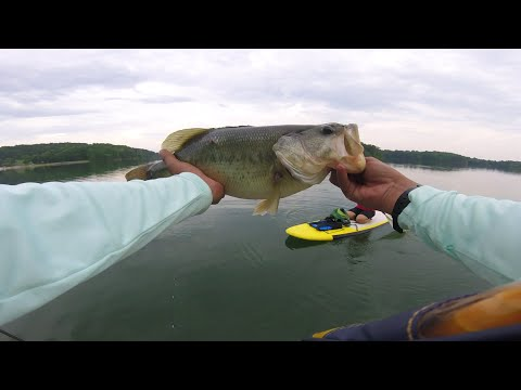 Weed edges dropshots monster bass how to find and fish for Seneca lake fishing report