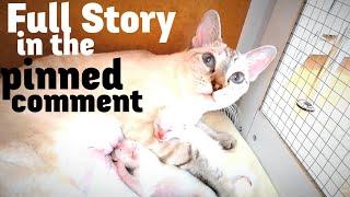 Cat nursing kittens - Update + Full Story (BONUS VIDEO)