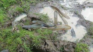 Дивно глибока яма, риба і краб - як ловити рибу з глибоким отвором - Камбоджа традиційне рибальство