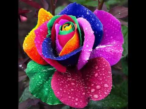 Lindas flores ex ticas youtube - Fotos de flores bonitas ...
