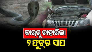 7-Feet Cobra Snake Rescued From Car's Engine In Bolangir