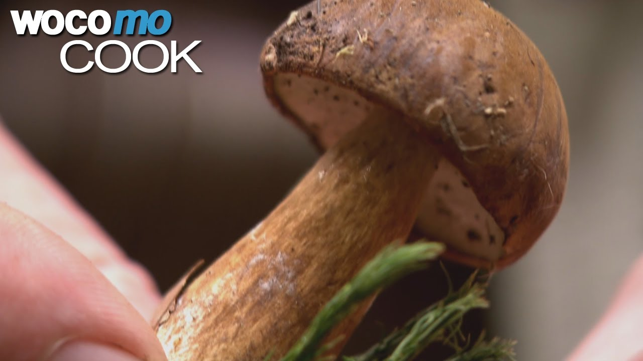 Kleine Pilzkunde - Pilze sammeln bei einem Waldspaziergang mit einem Pilzkenner!