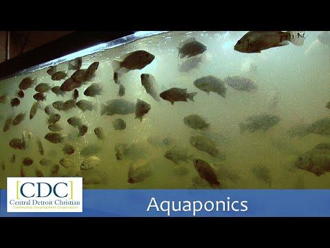 Aquaponics Tour
