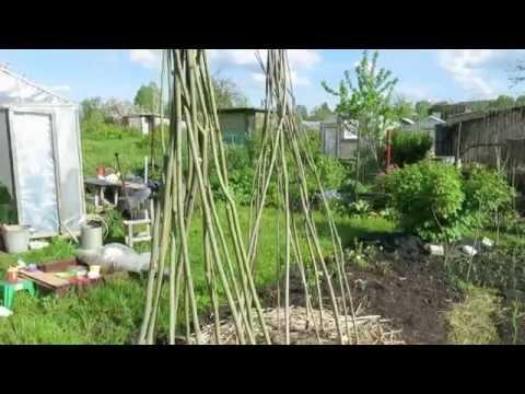 Опора - пирамида для фасоли // Beanpole