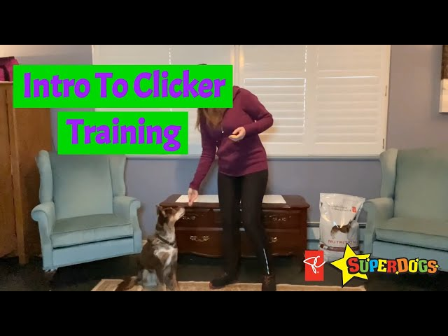 SuperDogs | Introduction to Clicker Training