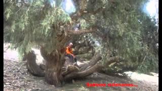 Alto Atlas-P.N. Toubkal-Marrakech-Imlil-Cascadas Irhoulidene-Ref. Lepiney
