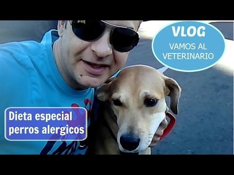 """VLOG """" visita al veterinario y dieta para perros alérgicos"""""""
